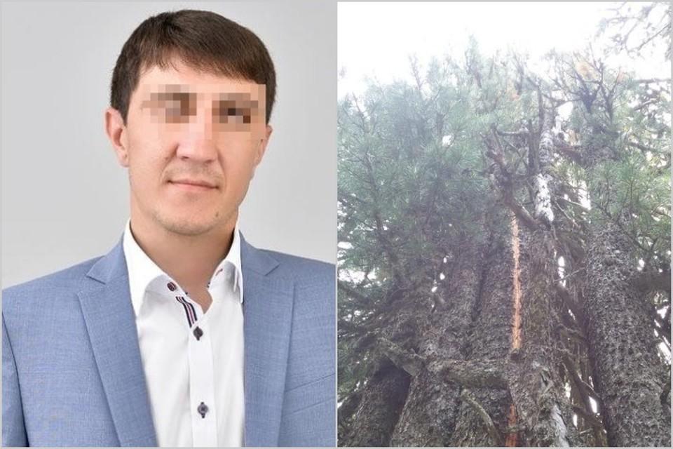 От грозы мужчины укрылись под огромным деревом и... Фото: паблик ЧП Хакасия, ГСУ СК России по Красноярскому краю и РХ.