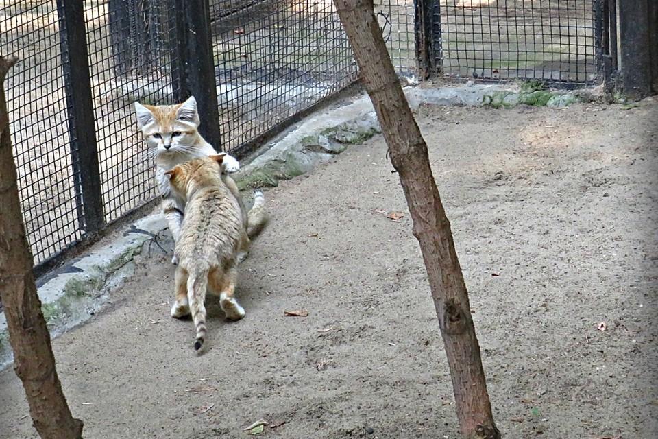 Котята родились во время карантина. ФОТО: предоставлены Анной Новиковой