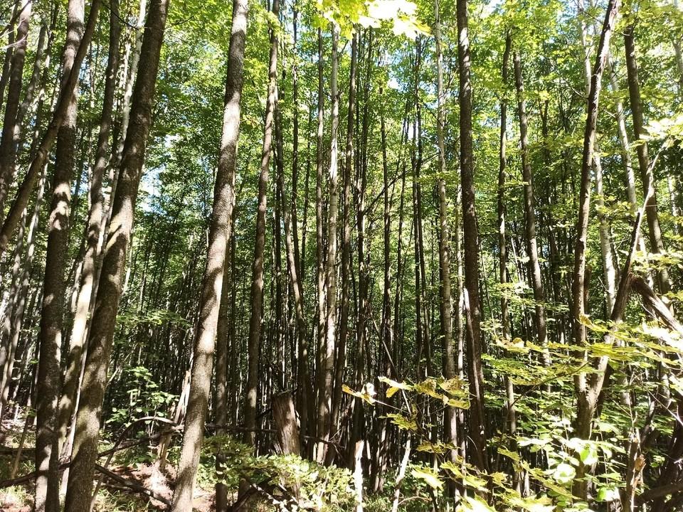 Жители области сажали деревья и у себя на участках.
