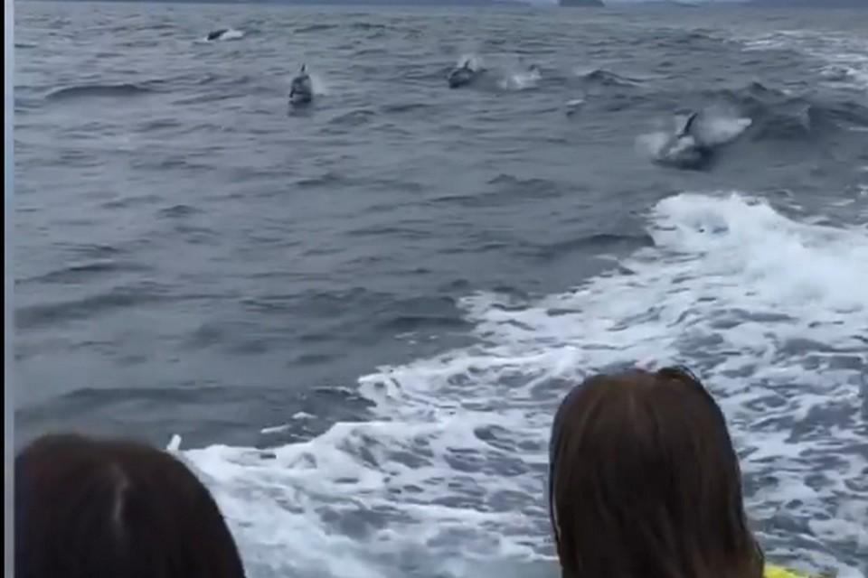 Такого количества дельфинов здесь не видели уже очень давно.