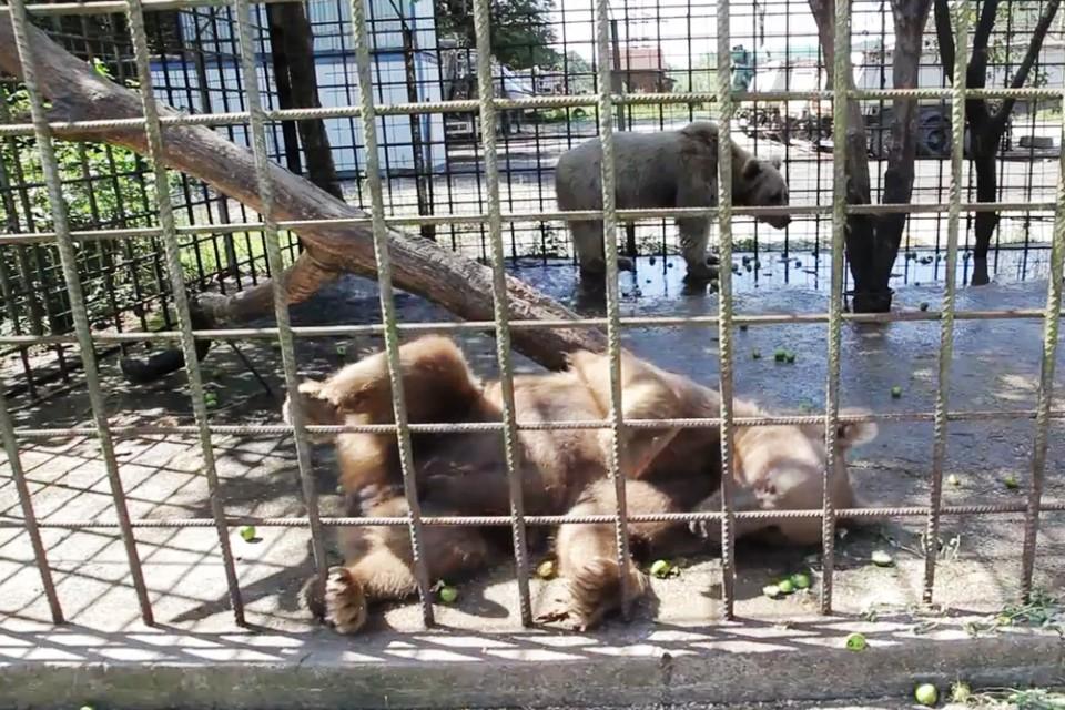 Медведи сидели в вольере.