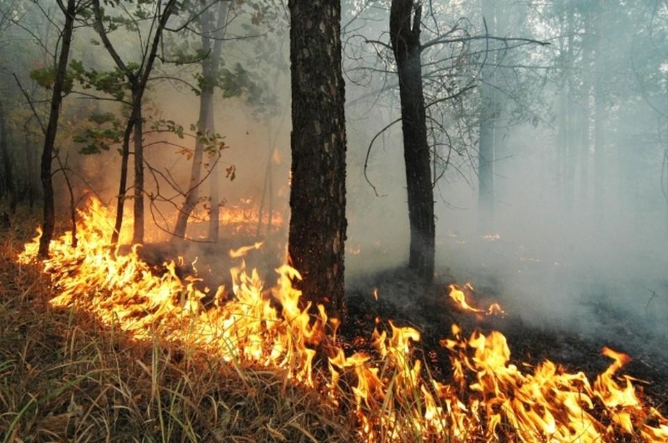 В Крыму продлили запрет на посещение лесов из-за высокой пожароопасности.