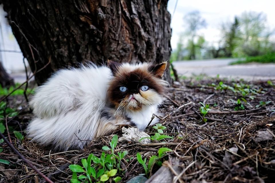 В Орловской области бродячий бешеный кот покусал мужчину