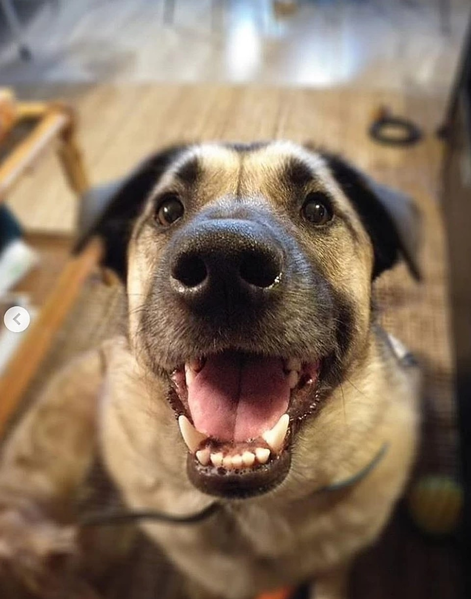 Фото из Instagram-аккаунта хозяйки собаки