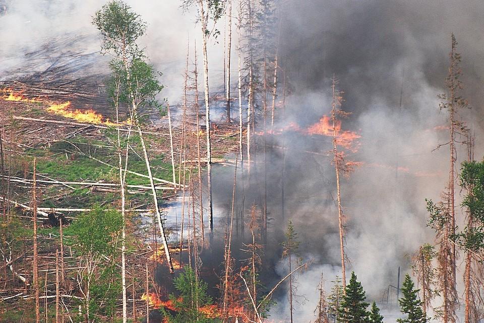 Пожары в лесах края ежедневно тушат более тысячи человек. Фото Виктор Чавайн.