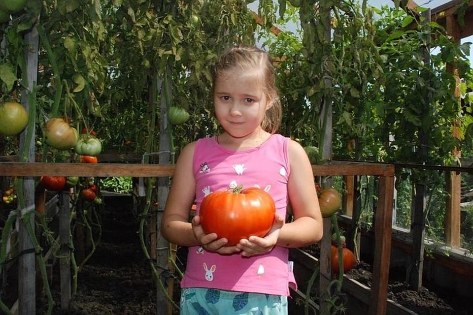 Такого размера помидорами в Минусинске никого не удивишь. Фото: пресс-служба Минусинска