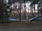 Воронежцы самостоятельно снесли «загадочный» забор в Северном лесу