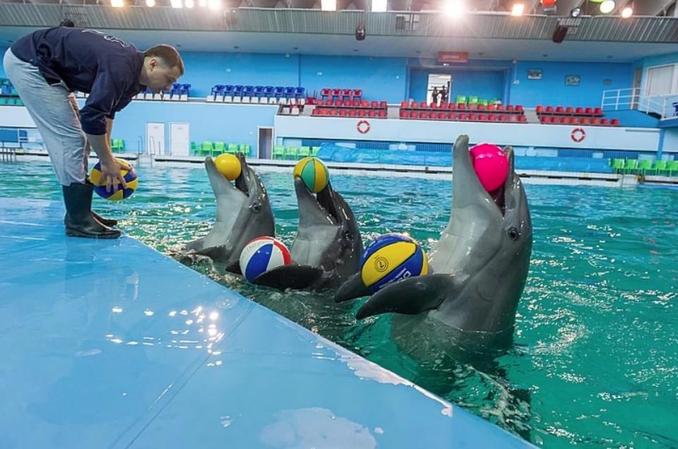 В Петербурге откроется дельфинарий спустя пять месяцев простоя из-за коронавируса