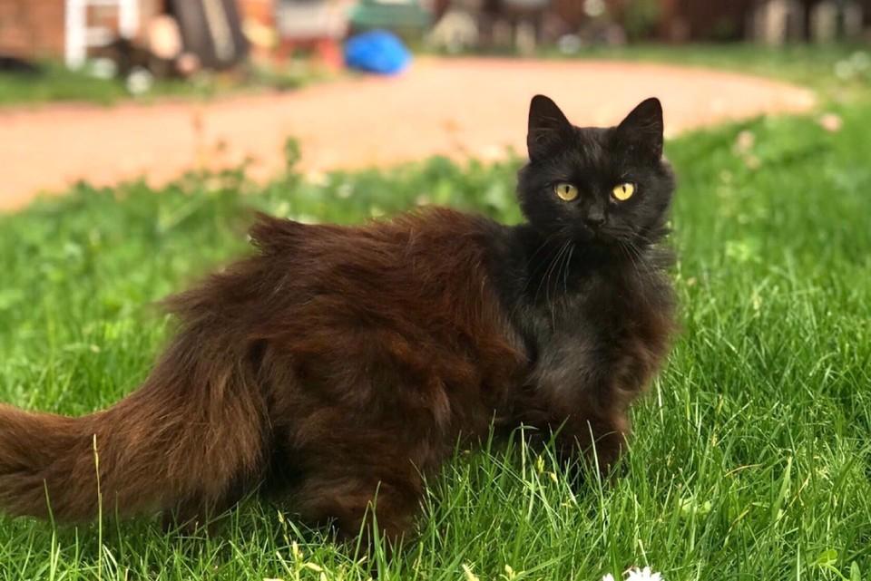 На вид Линд не старше двух лет. Фото предоставил мини-приют «Кошкин дом».