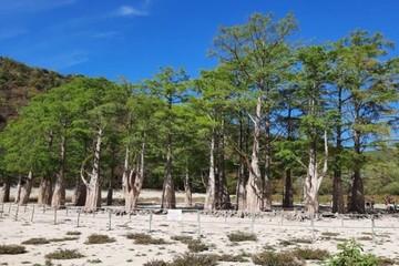 «Туристы вытаптывают корни»: В Анапе закрыли вход на пересохшее кипарисовое озеро