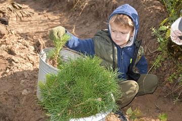 Акция «Сохраним лес» становится масштабной экологической инициативой
