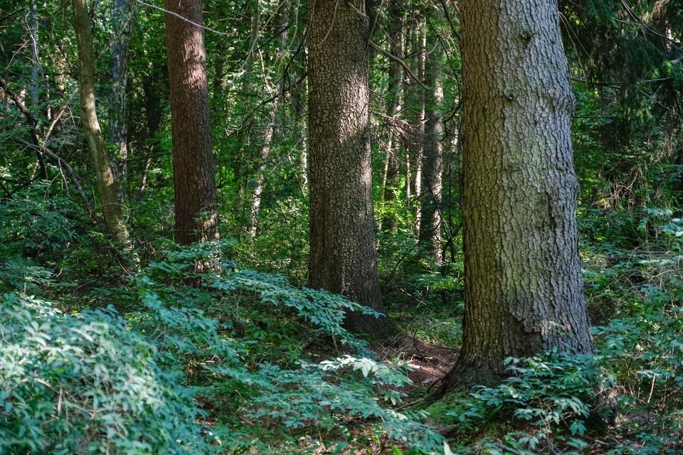 В лесу Ленобласти нашли без вести пропавшего мужчину