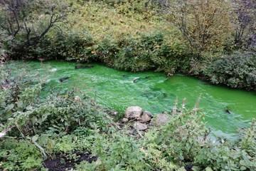 Вода в мурманской реке Росте стала ядовито-зеленой