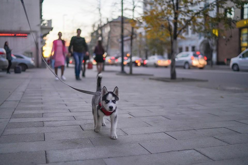 В Красноярске к выходным сильно похолодает
