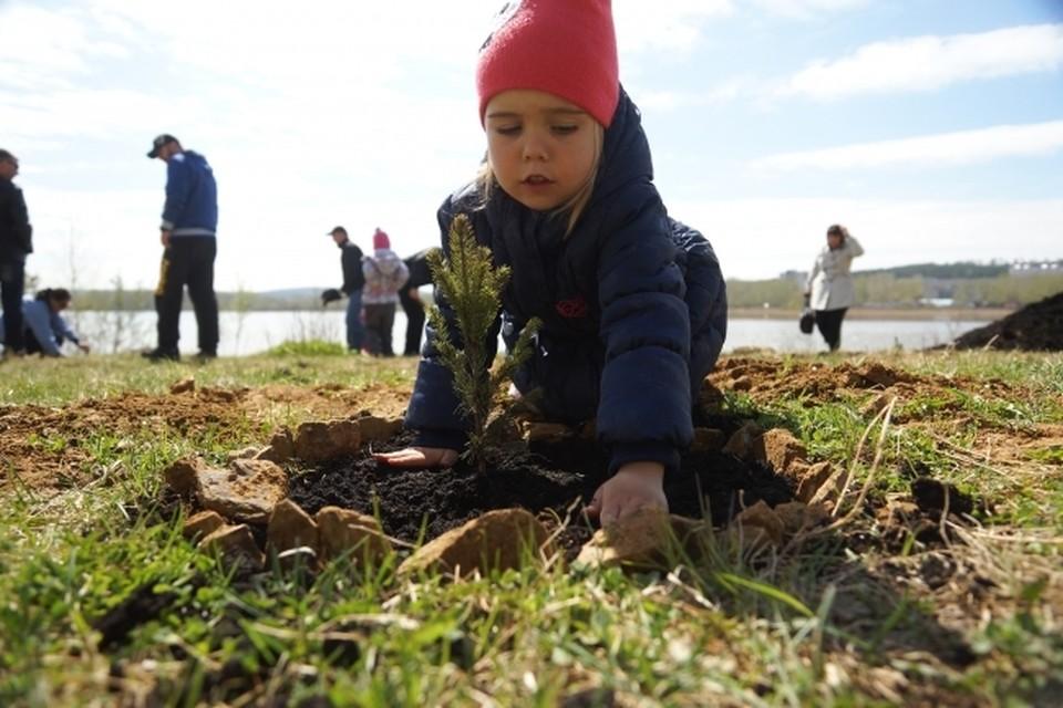 В Хабаровском крае стартовала акция «Сохраним лес»