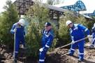 На НЛМК приступили к осенней посадке зеленых насаждений