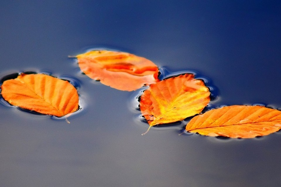 Октябрь — время перехода от осени к предзимью.