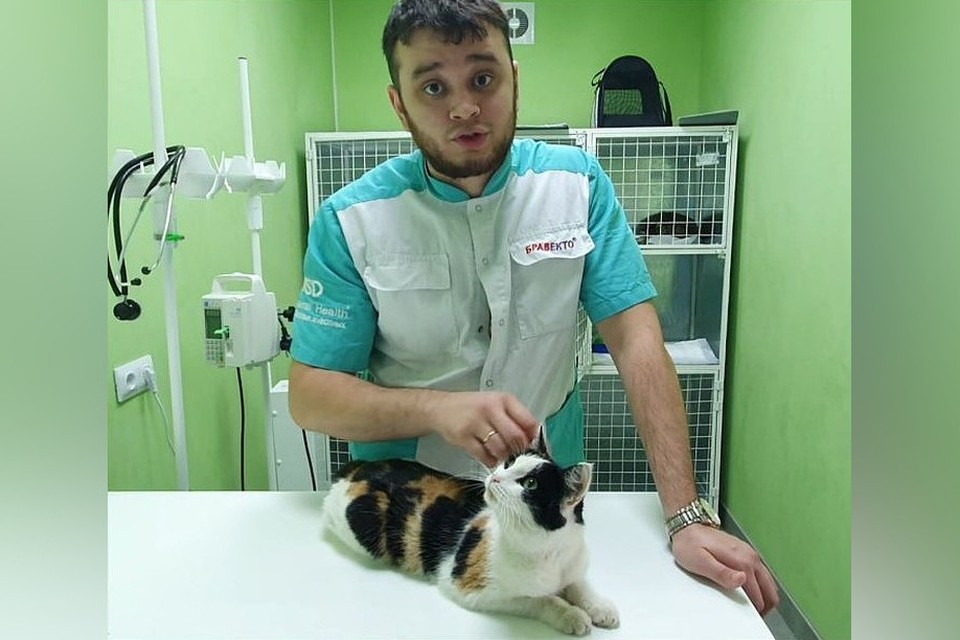 Кошечку привезли в ветклинику, где ей удалили опухоль