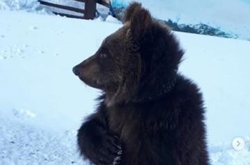 Видео с медвежонком, испугавшимся снега, умилило соцсети