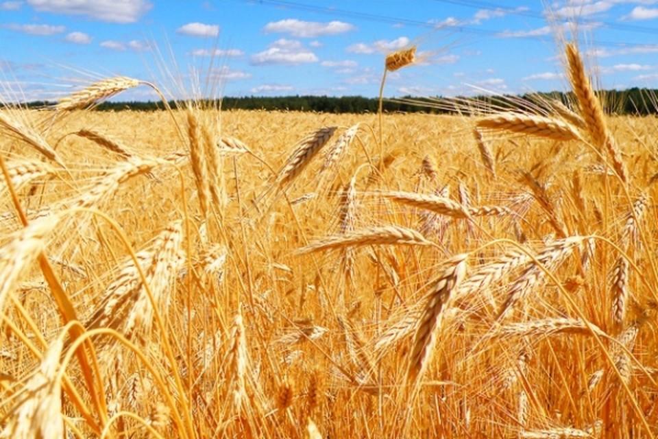 День работников сельского хозяйства и перерабатывающей промышленности - праздник тех, кто нас кормит.