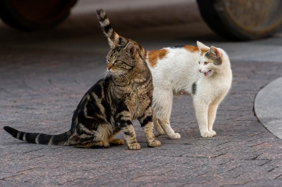 В Петроградском районе появился живодер, убивающий бездомных кошек.