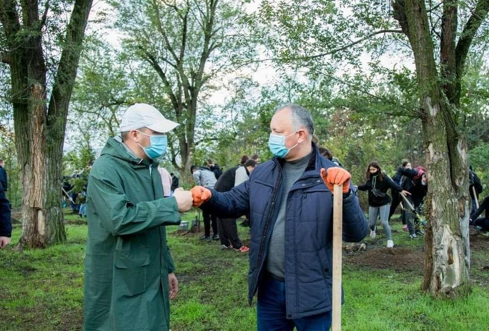 Президент и мэр Кишинева сажают деревья. Фото: телеграм-канал КП