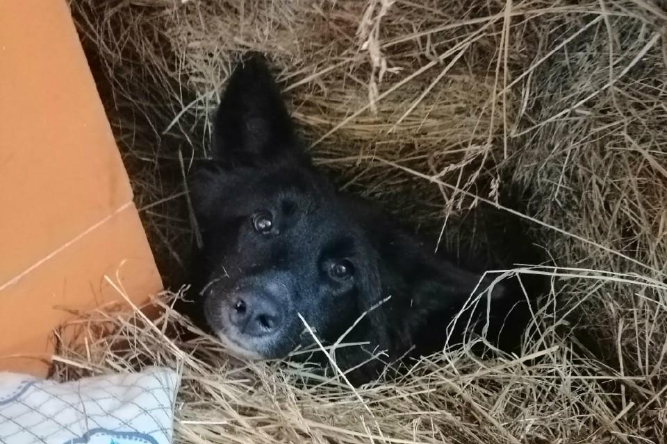 """Собаку убили выстрелом или ударом в голову. Фото: Вагончик """"Собачий Ангел"""""""
