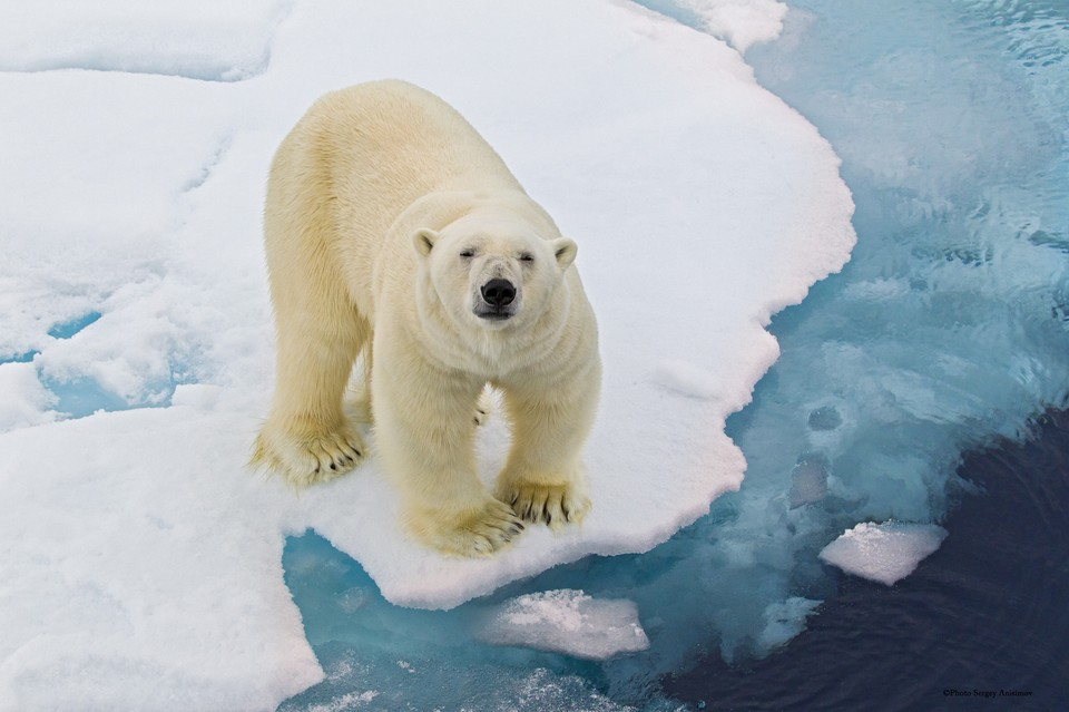 Что ты знаешь о жизни за Северным полярным кругом?