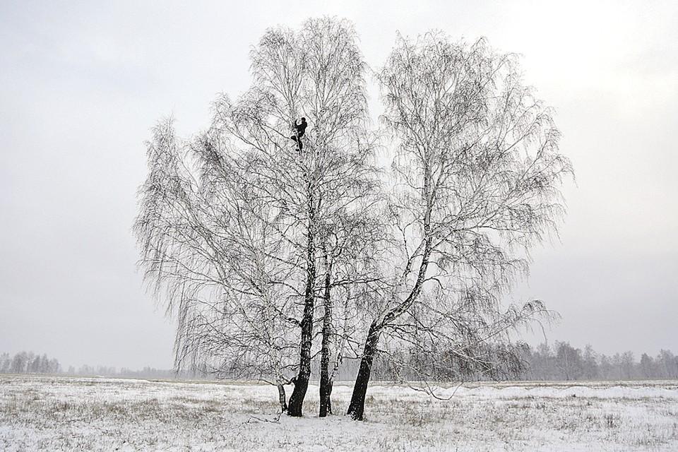 Алексей готов взбираться на дерево, даже когда на морозе руки дубеют. Фото: Евгений СОФИЙЧУК/ТАСС