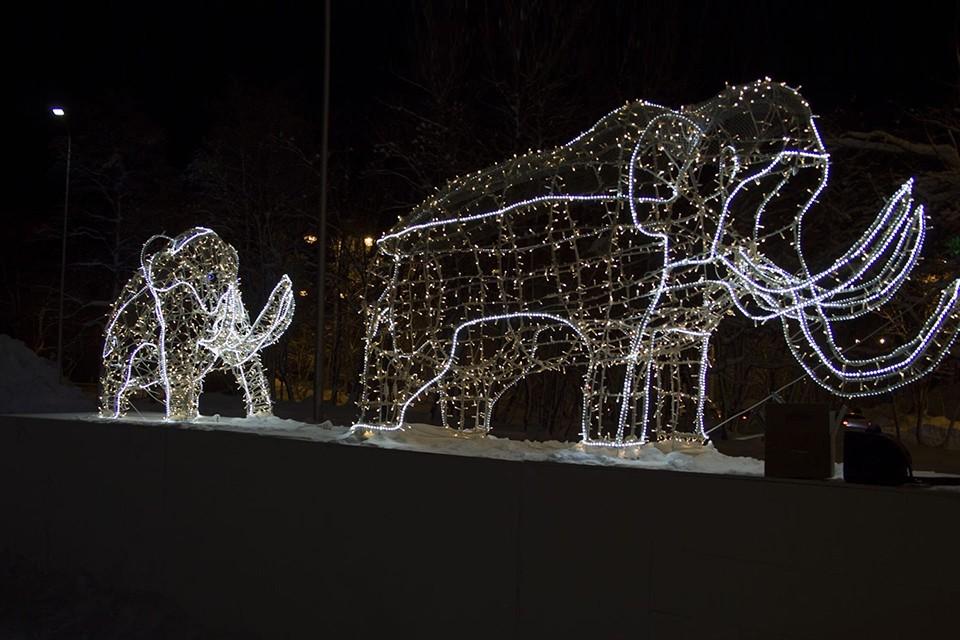 Местные жители уже могут видеть деревья, украшенные светящимися звездами. Фото: vk.com/tvoy_kirovsk