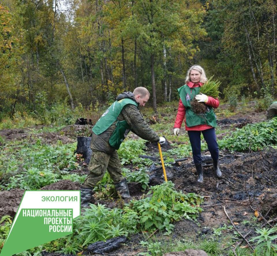 Почти два года в регионе восстанавливают лес по федеральному проекту. Фото: предоставлено героем публикации.