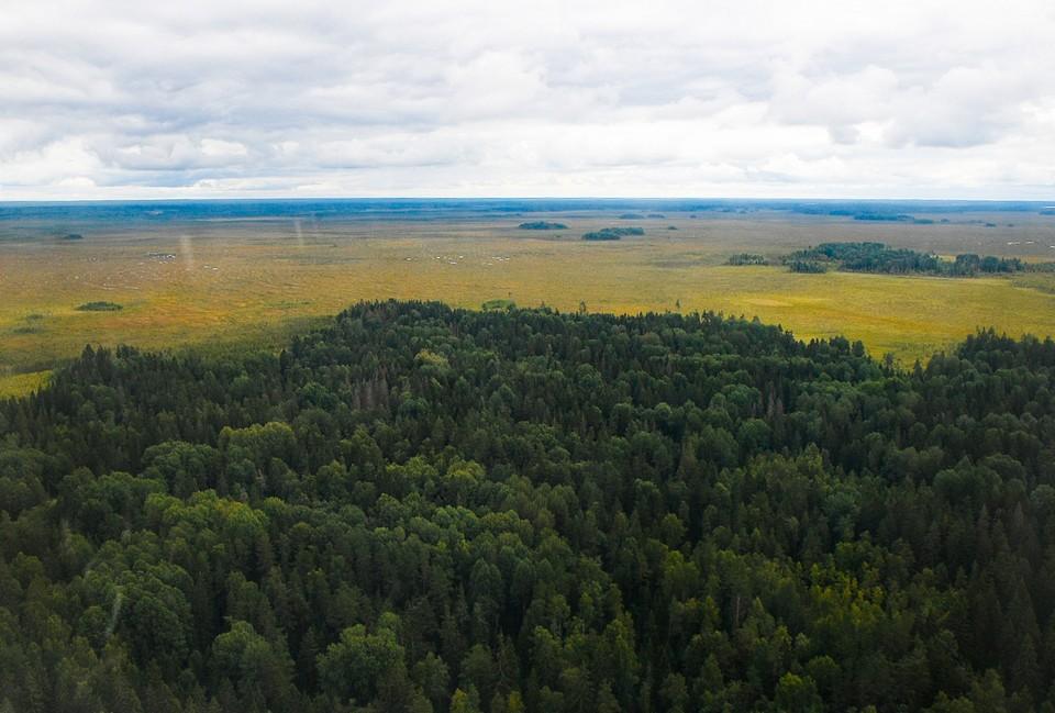 Лесной фонд увеличился на 410 га Фото: ПТО