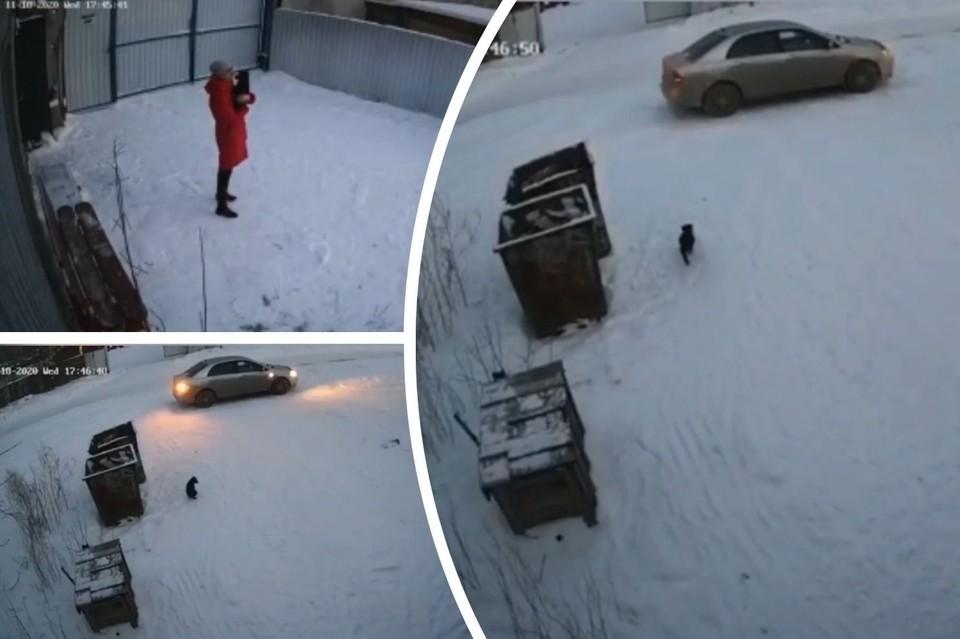 На видео попало, как девушка избавляется от щенка. Фото: стоп-кадры с записи видеонаблюдения