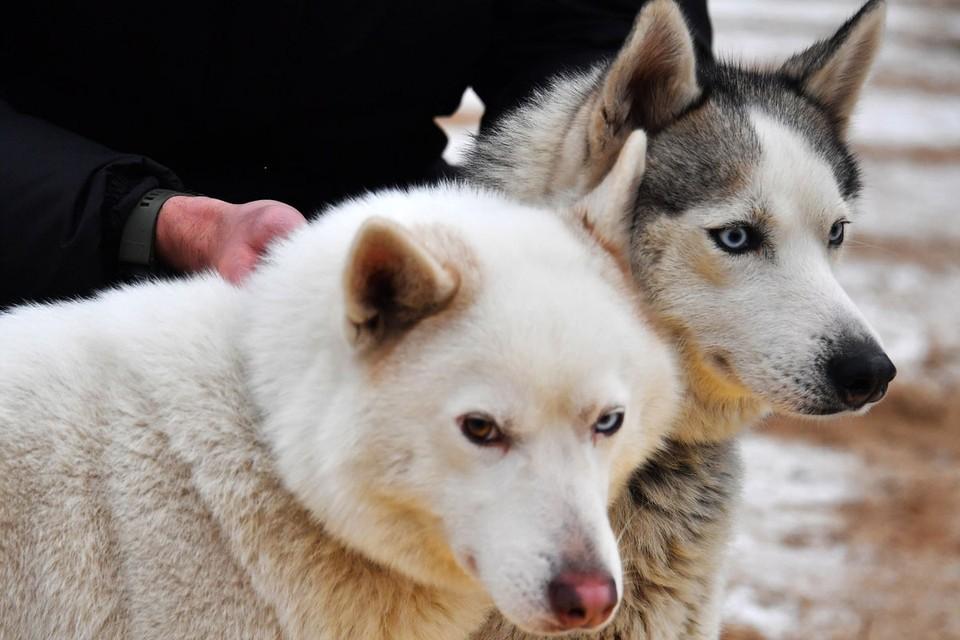 То, что собака – друг человека, знают все.
