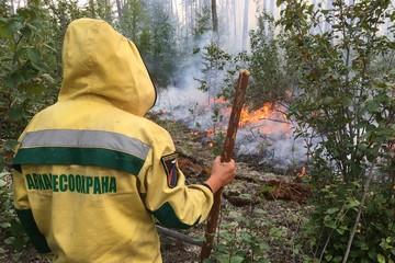 Масштабы лесных пожаров увязали со слабой населенностью регионов