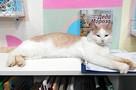 Вместо убитого кота-библиотекаря Степана на работу в Тверской области взяли нового мурлыку