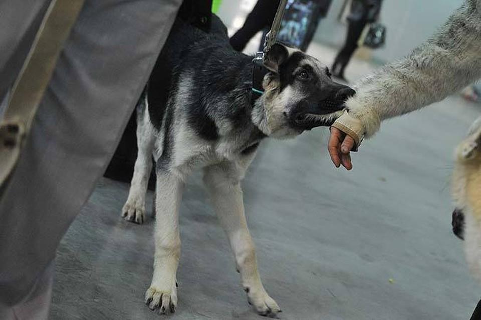 В Волгограде умерла девочка, которую покусала бешеная собака