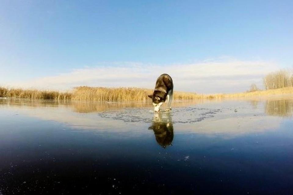 На реках Липецка и области начался ледостав