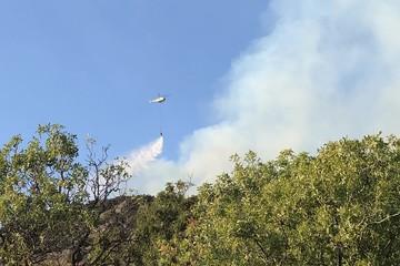 Резонансный не значит крупный: Эксперты объяснили пристальное внимание общественности к лесным пожарам