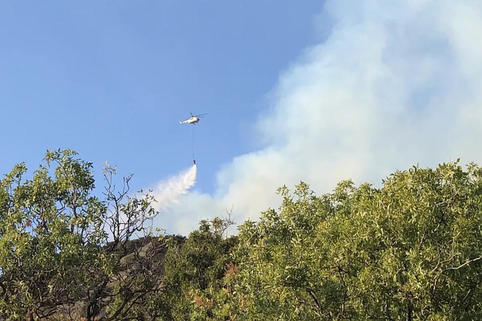 Лесной пожар в природном заповеднике «Утриш» Краснодарского края удалось остановить вовремя.