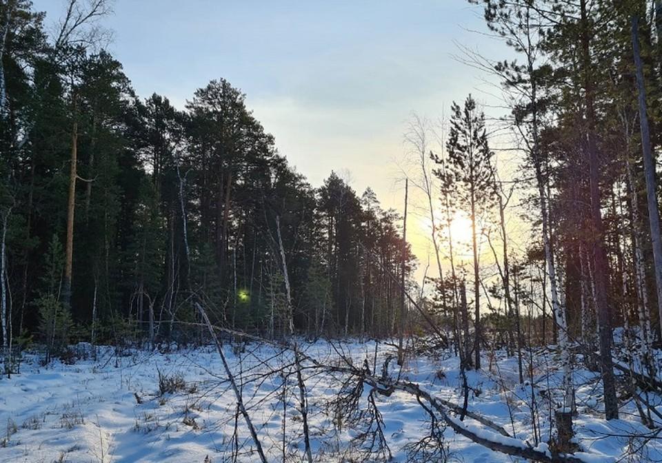 Погода в Югре на 4 декабря 2020 года: пасмурное небо и небольшой снег Фото: Виктория Терина