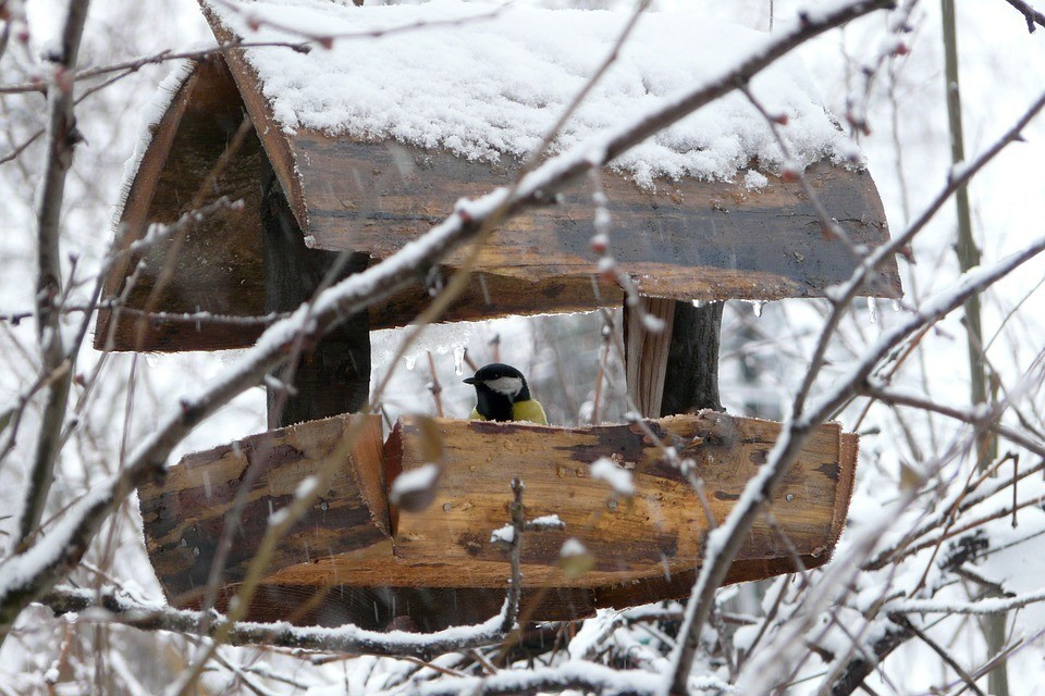 На Ямале ожидается небольшой снег и сильный ветер. Фото - pixabay.com.