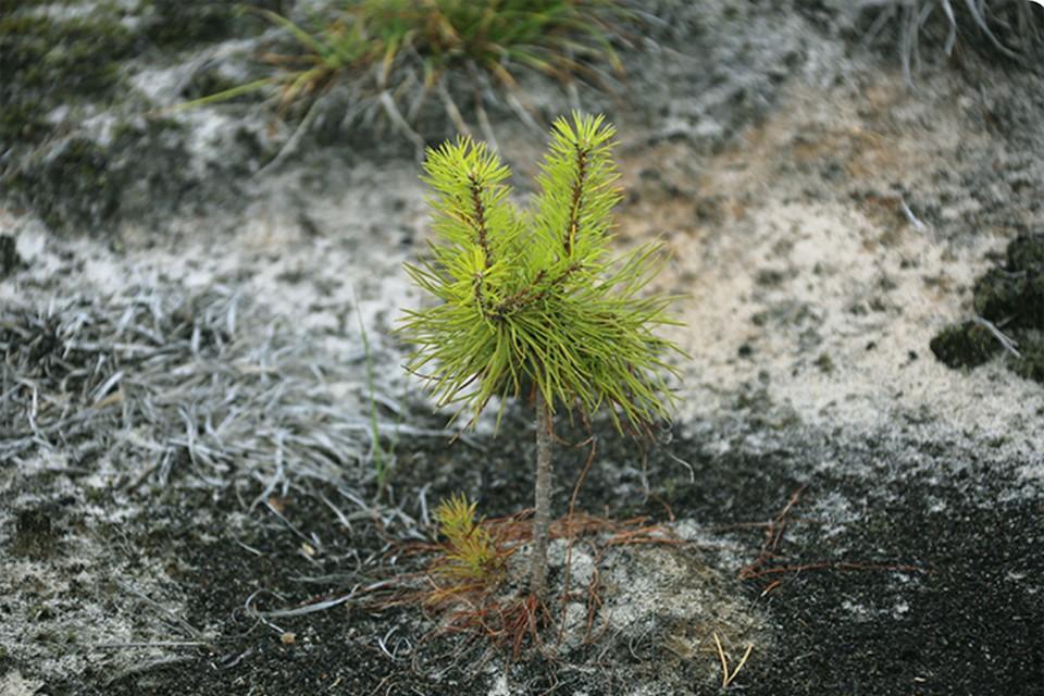 Охрана и защита наших лесов должны быть эффективными. Фото: rosleshoz.gov.ru