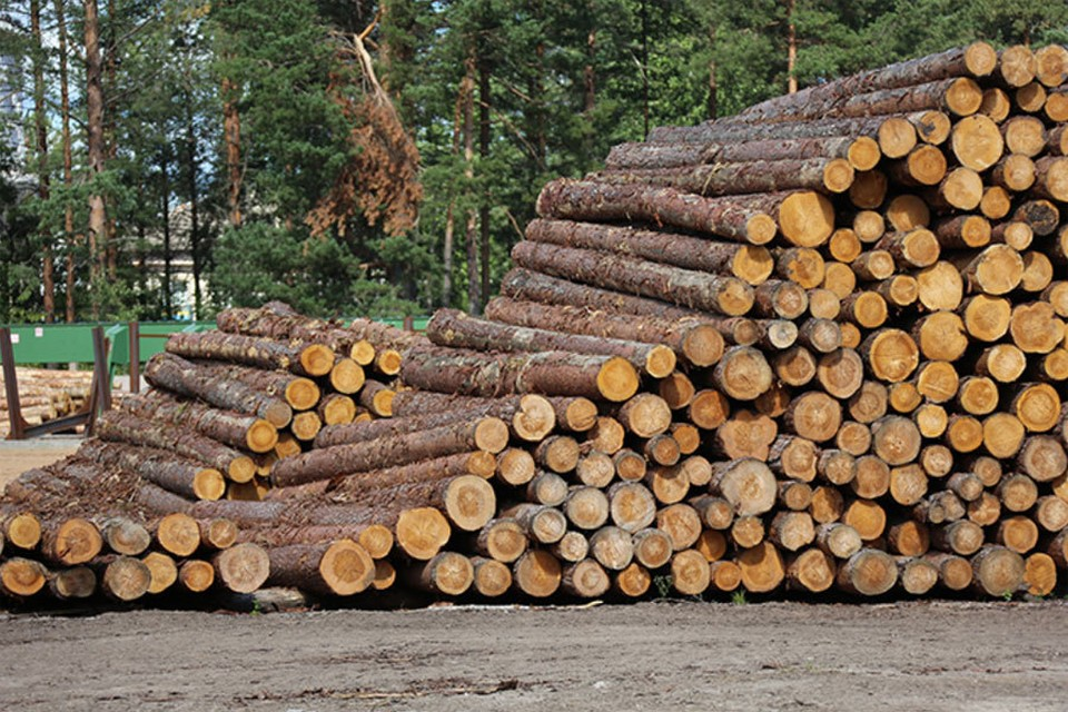 «Основные потери мы несем от незаконных вырубок и лесных пожаров». Фото: rosleshoz.gov.ru