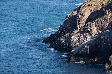 Кормиться нечем:  На морском побережье Кольского полуострова становится все меньше птиц