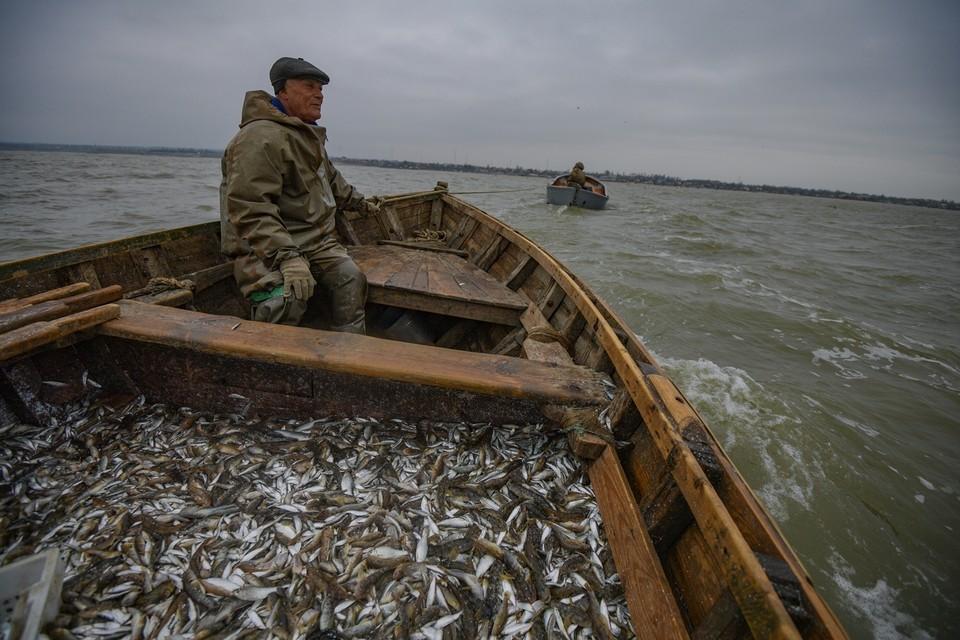 Из Азовского моря начала уходить рыба, привыкшая к более пресной воде.