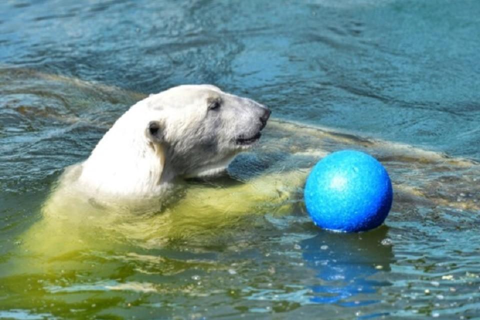 Медведица показала себя хорошей мамой. Фото: пресс-служба Ростовского зоопарка