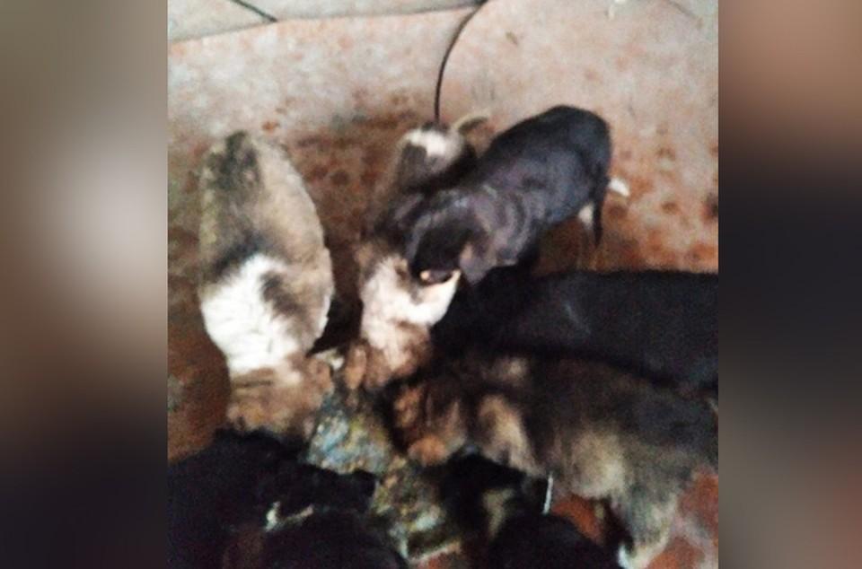 Малыши на грани гибели: Десятки щенков нашли рабочие на режимном предприятии Нижнего Новгорода.
