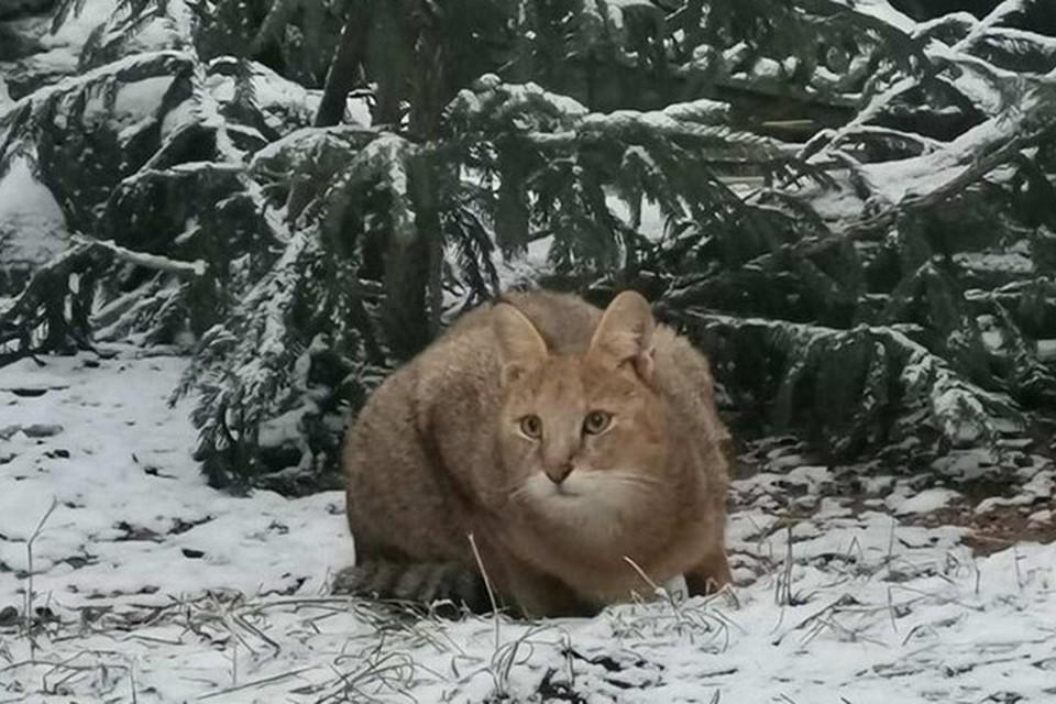 В минском зоопарке появился новый житель. Фото: БелТА