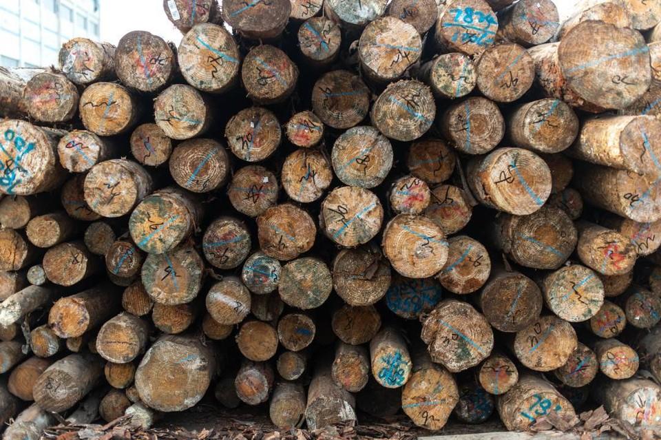Получателями лесопродукции стали 70 государств.